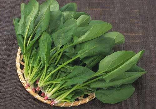 建湖专业尖叶型菠菜批发有助消化
